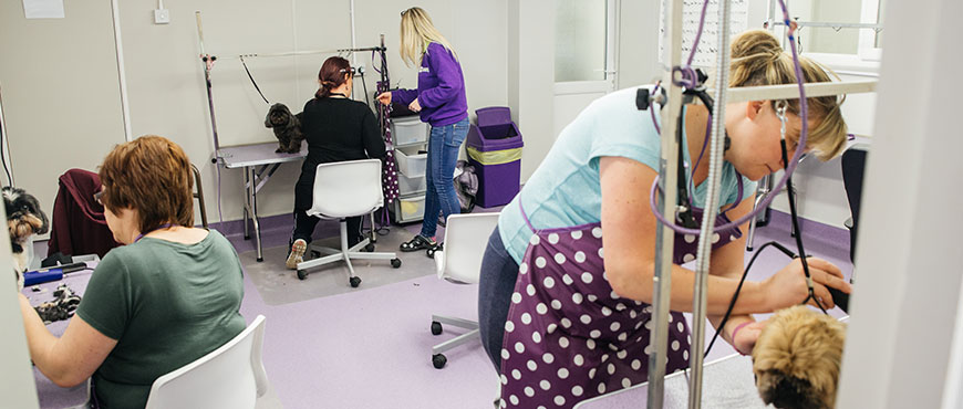 Pet Grooming Training Courses